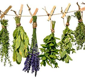 Szárított növények